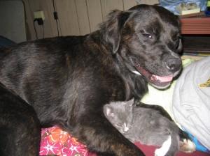 Tabby and her kitten